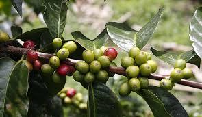 Dia del café de Colombia