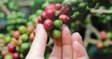 Nespresso, reconoce la importancia de la equidad de género  en la cadena de valor del café